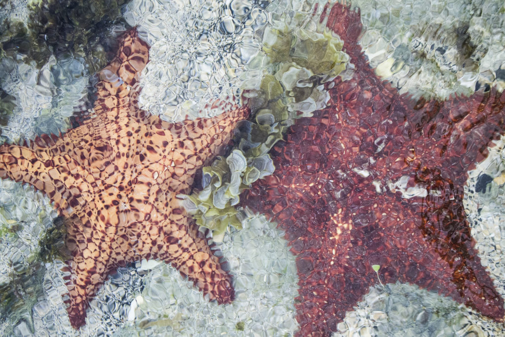 unusual sea stars came close to the beach